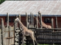 Dyreparken
